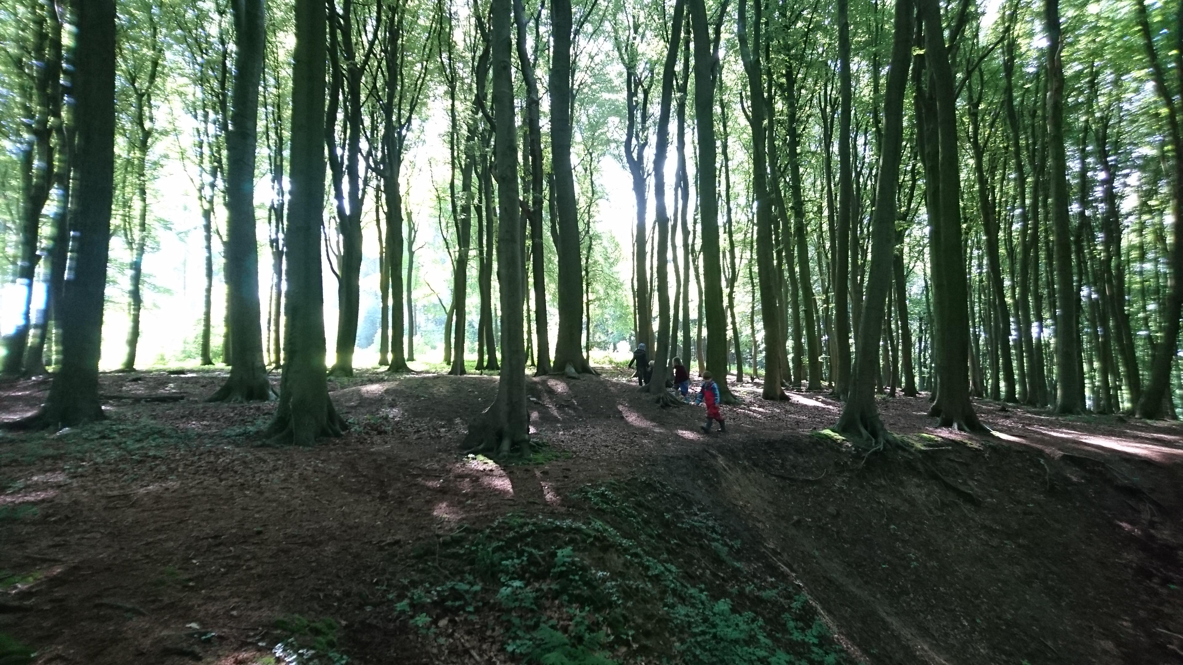 Wald 1
